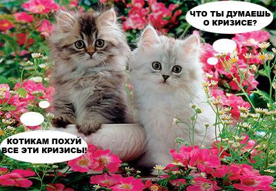 Котикам похуй кризисы